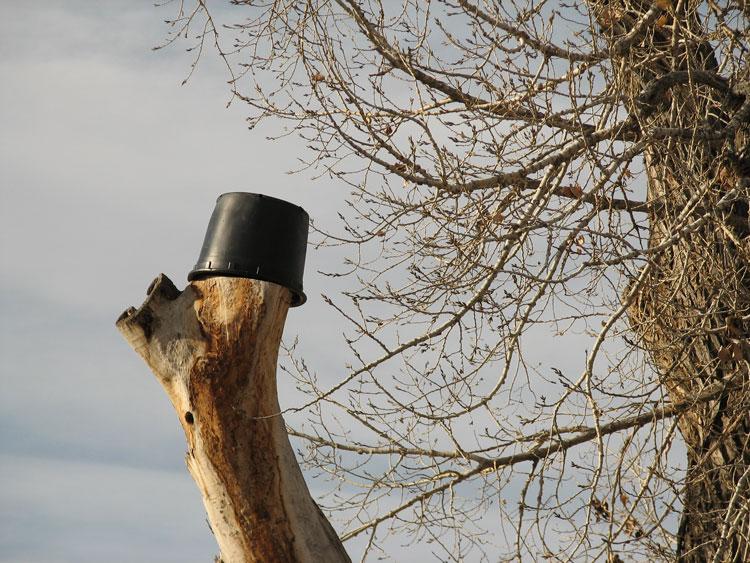 Bucket Tree