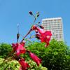 Tower Flower