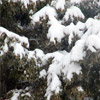 The Frist Snow