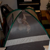 Tent Check