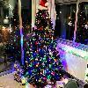Setting up the Christmas Tree